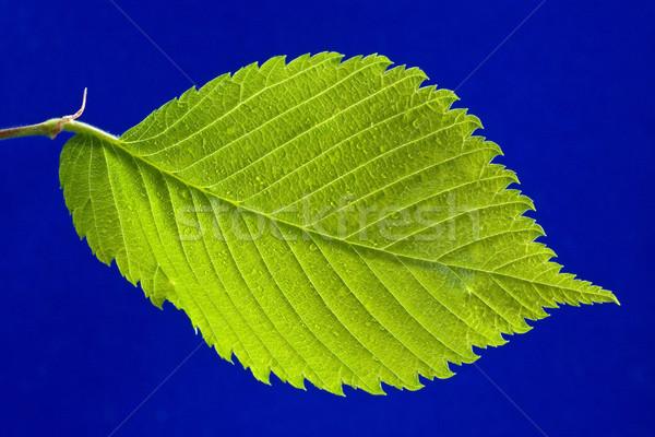 green bright leaf Stock photo © Grazvydas