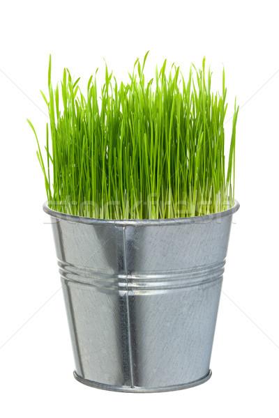 Grama verde pequeno metal balde isolado branco Foto stock © Grazvydas