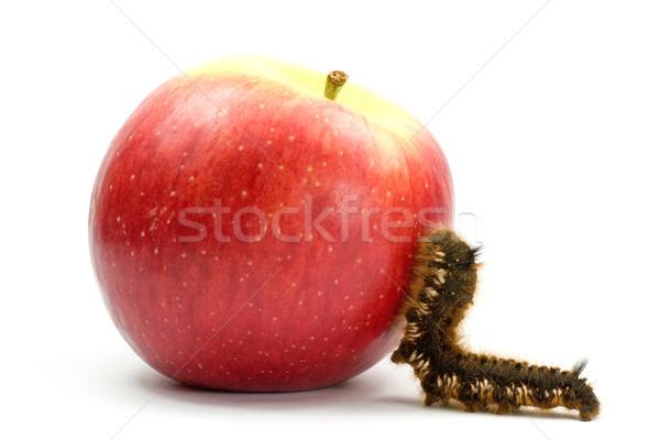 Lagarta subir maçã marrom peludo cor Foto stock © Grazvydas