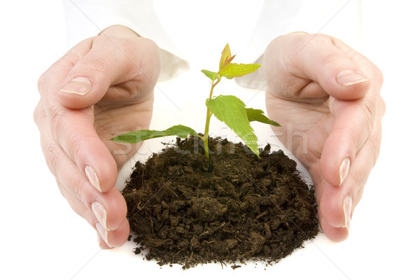 hands and new plant Stock photo © Grazvydas