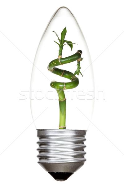 Foto stock: Verde · bambu · dentro · isolado · branco