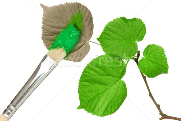 щетка Живопись листьев изолированный белый Сток-фото © Grazvydas