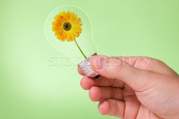 стороны лампочка цветок внутри Сток-фото © Grazvydas