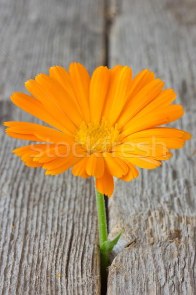花 成長 古い木材 階 美しい 亀裂 ストックフォト © Grazvydas