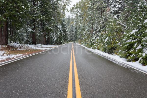道路 森林 冬 雪 ツリー ストックフォト © gregorydean