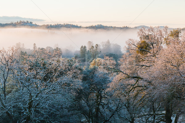 Fog Rolling Through the Forest Stock photo © gregorydean