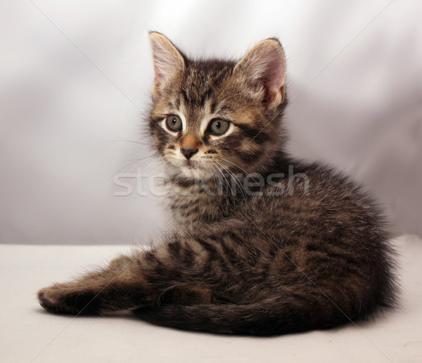 Stock photo: Adorable kitten 4