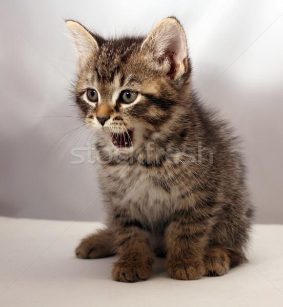 Adorable kitten 3 Stock photo © grivet