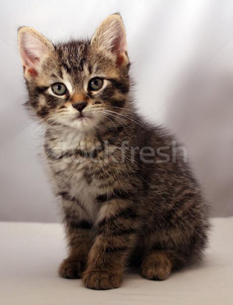 Adorable kitten 6 Stock photo © grivet