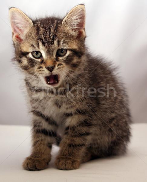 Adorable kitten 7 Stock photo © grivet
