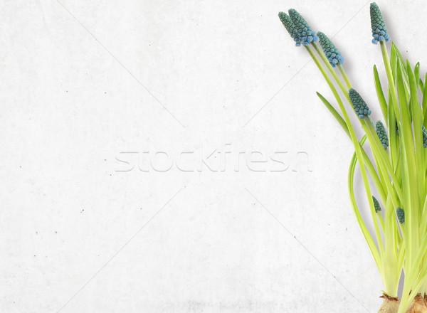 Background with flowers. Stock photo © gromovataya