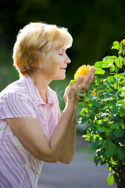Sentimentality. Mature Old Lady Smelling Yellow Flower Stock photo © gromovataya