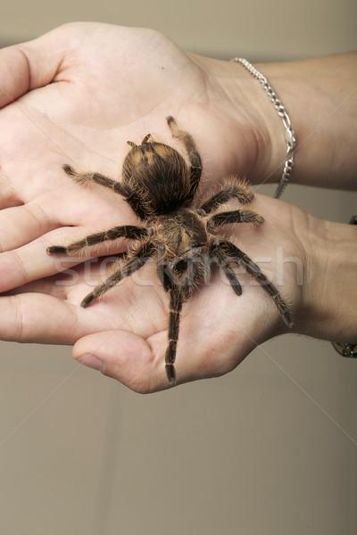 Spinachtige monster bruin spin hand zwarte Stockfoto © gromovataya