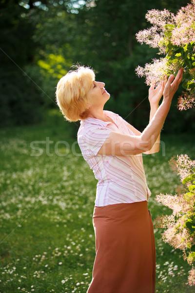 Kertészkedés kegyelmes idős nő virágok fa Stock fotó © gromovataya