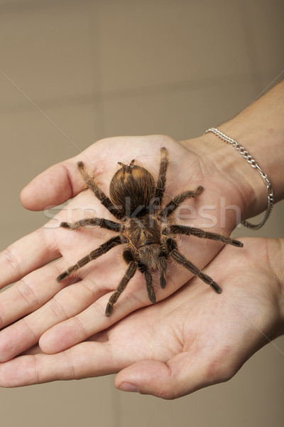 Spider on a woman hand sitting Stock photo © gromovataya