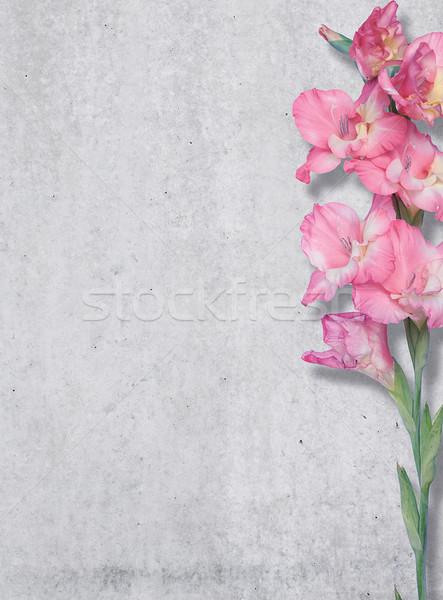 розовый Лилия конкретные стены текстуры свободный Сток-фото © gromovataya