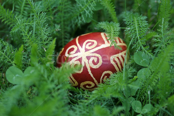 Croatian traditional easter eggs on green grass Stock photo © gsermek