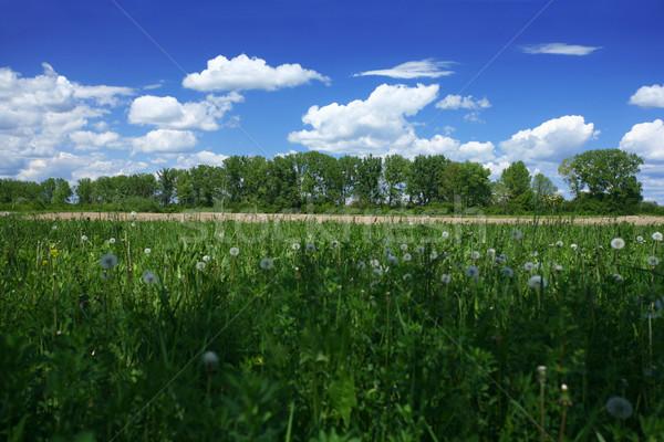 Springtime green landscape Stock photo © gsermek