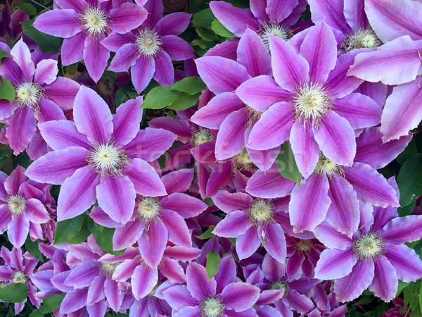 Fiori floreale fiore primavera design Foto d'archivio © gsermek
