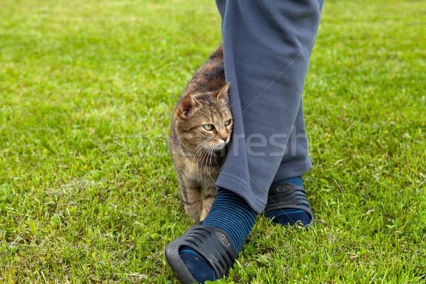 Grijze kat vrouwelijke been natuur kat haren Stockfoto © gsermek