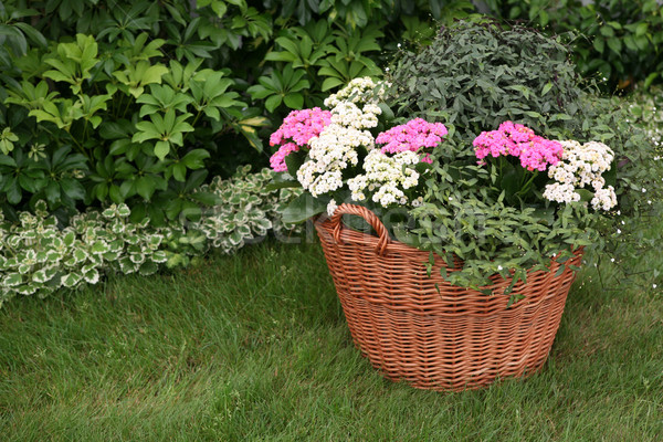 Flowers in the garden planted in a basket Stock photo © gsermek