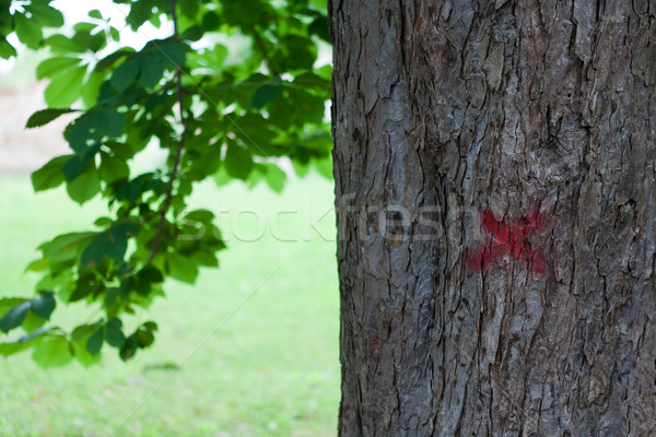 Tree marked with red paint Stock photo © gsermek