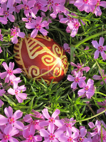 Croatian traditional easter egg on pink flowers Stock photo © gsermek