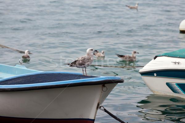 Młodych mewa łodzi tle lata ocean Zdjęcia stock © gsermek