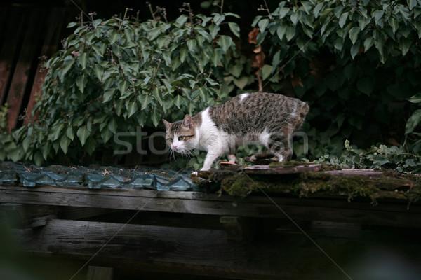 Gato cauda casa olhos natureza casa Foto stock © gsermek