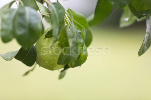 Ripe pear with rain drops Stock photo © gsermek
