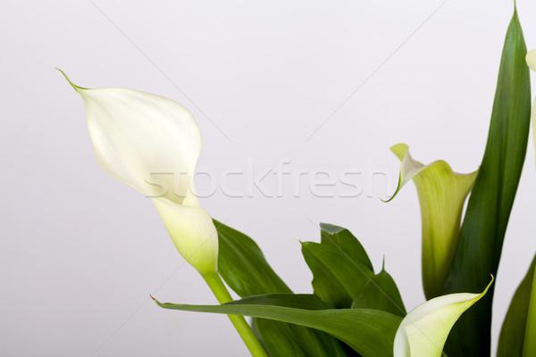 Gris printemps feuille été tropicales Photo stock © gsermek