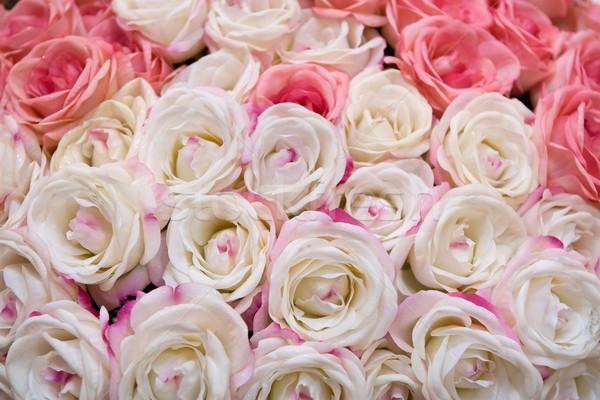 Big bunch of multiple pink roses Stock photo © gsermek