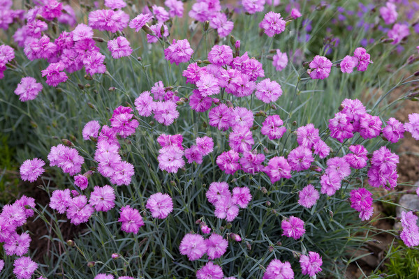 розовый саду весны любви лист лет Сток-фото © gsermek