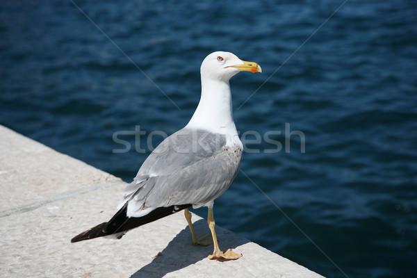 鴎 海 鳥 砂 徒歩 白 ストックフォト © gsermek