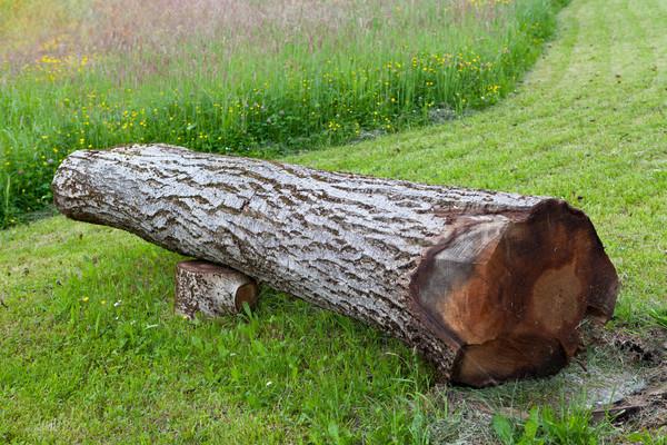 Zdjęcia stock: Cięcia · orzech · włoski · drzewo · puszka · używany · ławce