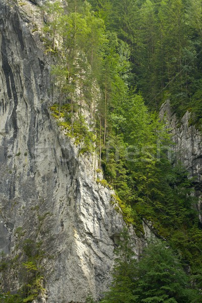 Stock photo: Mountain Forest