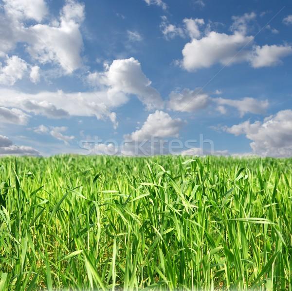 Campo fresco verde agrícola nublado blue sky Foto stock © Gudella