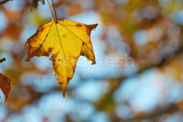 Leaf Stock photo © Gudella
