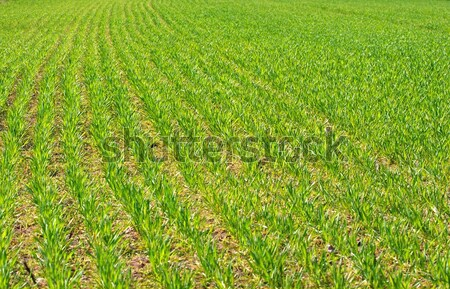 Field Stock photo © Gudella