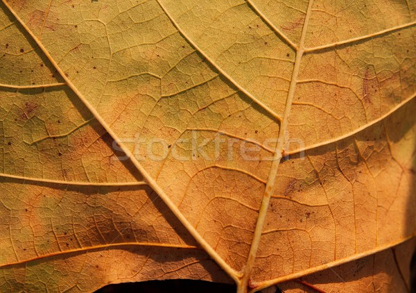 Folha amarelo outono morte vida Foto stock © Gudella