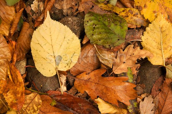 Folhas textura folha laranja piso Foto stock © Gudella