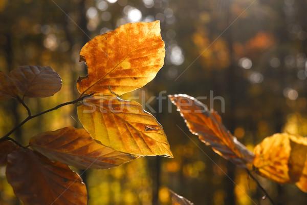 Folhas vibrante profundo floresta árvore Foto stock © Gudella