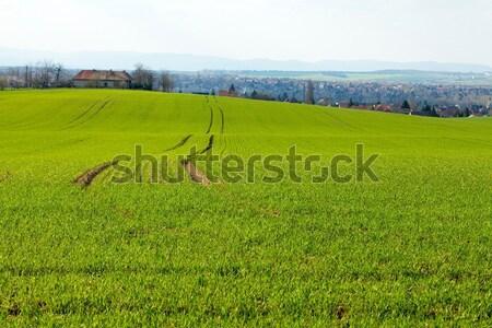 Agricultura verde agrícola campo rural primavera Foto stock © Gudella