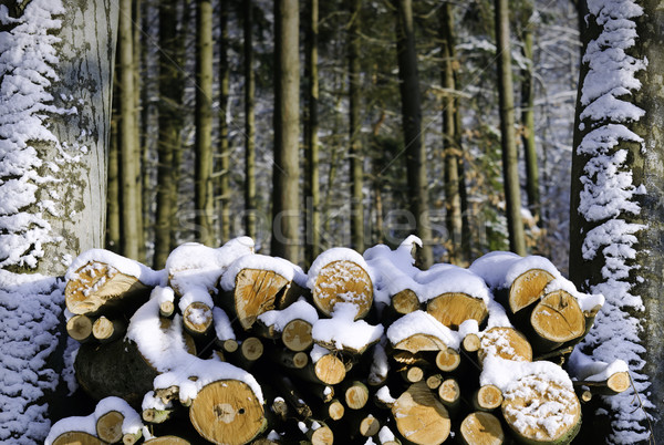Drewno opałowe drewna lasu śniegu lodu zimą Zdjęcia stock © guffoto