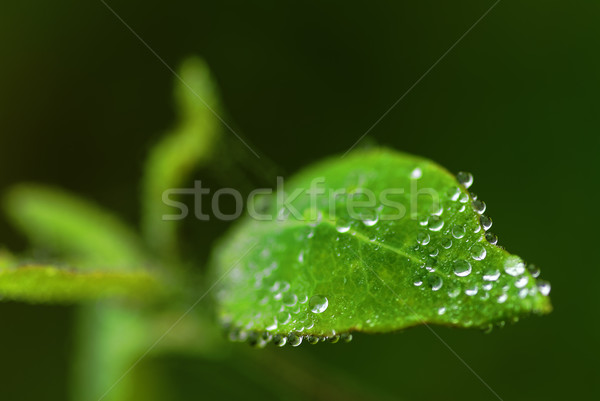 droplets Stock photo © guffoto