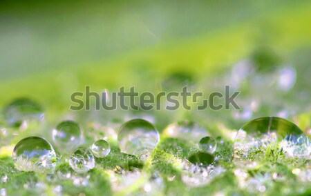 raindrop Stock photo © guffoto