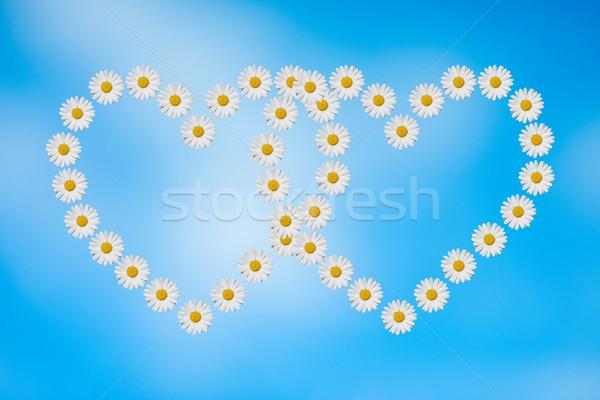 Százszorszép szív kettő szívek százszorszépek virág Stock fotó © guffoto
