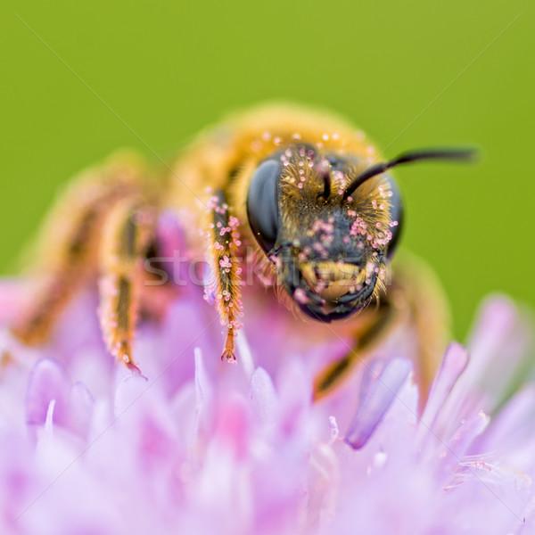 bee Stock photo © guffoto