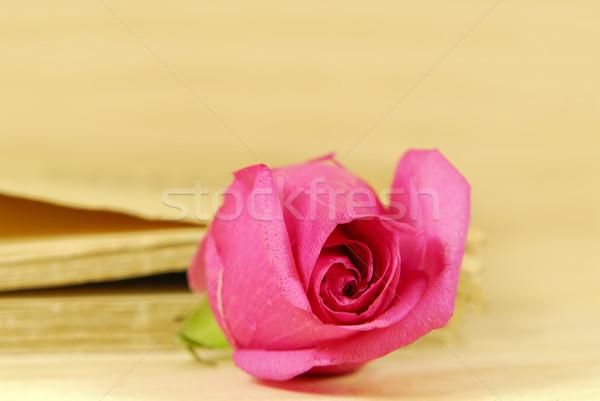 закрывается Розовые розы книга любви розовый Сток-фото © guffoto