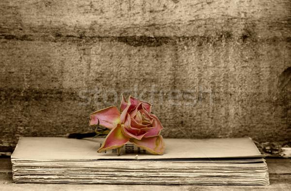 faded rose Stock photo © guffoto